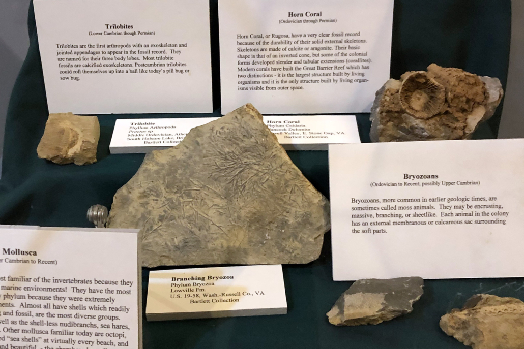 Geologic History examples - Museum of the Middle Appalachians - Saltville, VA