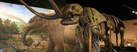 Mastodon Skeleton Cast - Museum of the Middle Appalachians - Saltville, VA