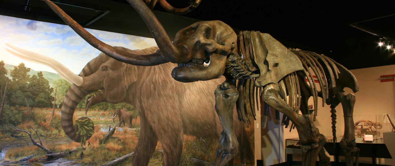 Mastodon Skeleton - Museum of the Middle Appalachians - Saltville, VA